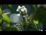 Весна <3 МЕЛОДИЯ ДУШИ ВСЕМ Отличных Выходных!