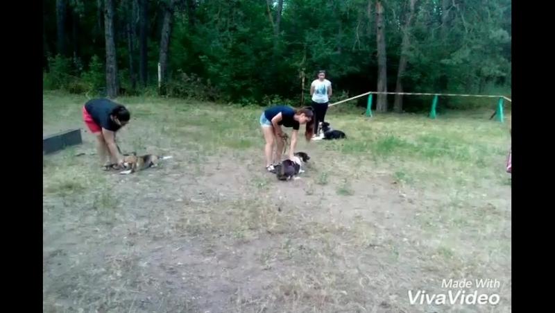 Небольшое видео с наших занятий на тренировочной площадке на ул. Громова