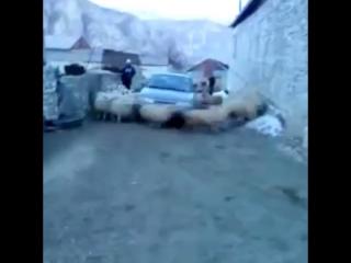 лопата торнадо купить в москве недорого 4 местную с тамбуром