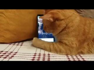 Слепой кот очень любит слушать как играет этот пианист