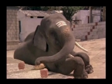 Жажда жизни Jeene Ki Arzoo 1981 Индийские фильмы онлайн http://indiomania.xp3.biz