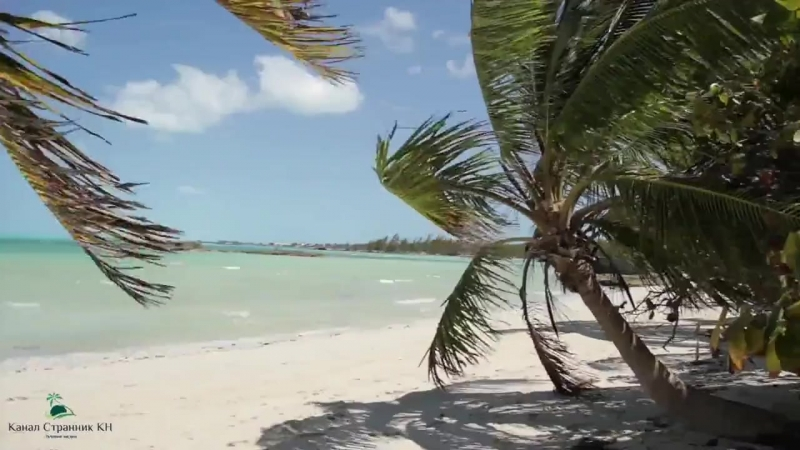 Пляж со свиньями на Багамах..mp4