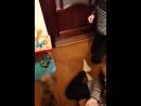 зоофилы мучают кошку