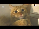 Кот, любящий пылесос