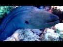 Такой подводный мир Красного моря я вижу каждый день .bitcoin,redes,eilat