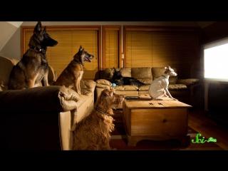 Что видят наши четвероногие друзья, когда смотрят телевизор?