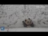 Вот что происходит, когда бамбуковый медведь научился кататься с горки