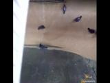 Птиц засасывает вместе с зерном на хлебозаводе