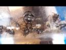 Serviformica rufibarbis краснощекий муравей минер 2017 08 07