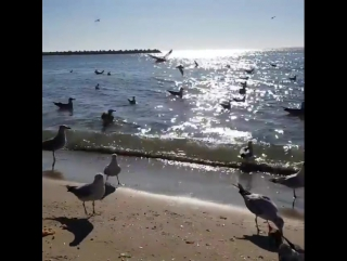 #Чайки #наберегуморя #побережьеболгарии #пляж в городе #Варна #январь2018 #Черноеморе #meer #schwarzemeer #sea #blaksea #strand