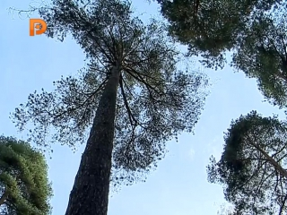 В Костромском парке Берендеевка приступили к установке света