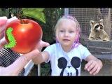 Алиса кормит ЕНОТА !!! Мини зоопарк для детей ! Alice feeds the RACCOON !!! Mini zoo for kids !