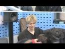 180313 Отрывок из трансляции SBS Power FM Choi Hwajung's Power Time