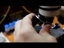 Лучший подарок ребенку! Микроскоп Levenhuk Rainbow 2L и 2L PLUS! Обзор школьных microscopes!