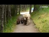 Как нужно себя вести, если наткнулся в лесу на медведей