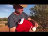 Как правильно использовать шляпу Санты