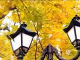 ГТРК ЛНР. PROФото. 2 сезон №176. 14 ноября 2017 год.
