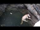Пес упал в глубокий колодец и держался на плаву из последних сил