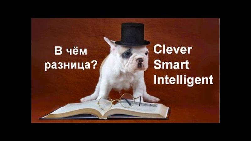 Сlever, Smart, Intelligent. В чём разница? Английский язык. Лексика