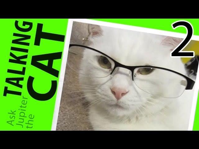 Ask Jupiter 2 - The Talking Cat is Back