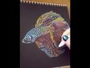 Сиамский петушок бойцовая рыбка. Betta splendens fish. . ✍черная бумага маркеры Giotto металл. оттенки/black paper meta