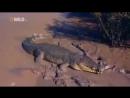 Суперхищники - Нильский Крокодил. Гигансткий Крокодил. Атака Крокодила