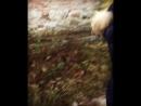 06 11 17 Брестская Крепость