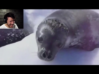 Markiplier Try Not To Laugh Challenge. Sea Doggo