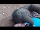 Слоненок обнимает