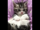 Happy Cats - Your daily dose of cuteness! ❤️(640p)