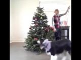 Собака наряжает елку
