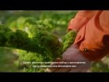 Секреты норвежской кухни: Тронхейм