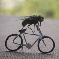 Zoony Fly