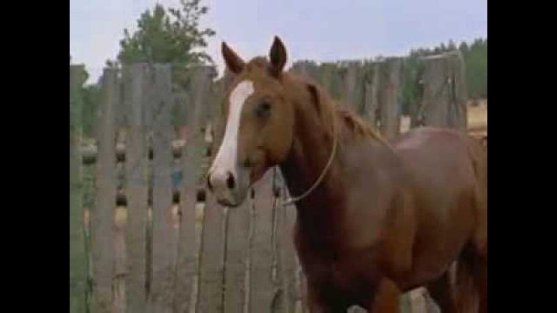 Великолепные лошади ,жизнь диких лошадей на равнинах!