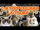 Киски. grumpy cat. Мурчащие коты.
