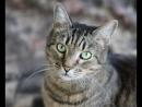Котик Лёшенька ищем хозяев