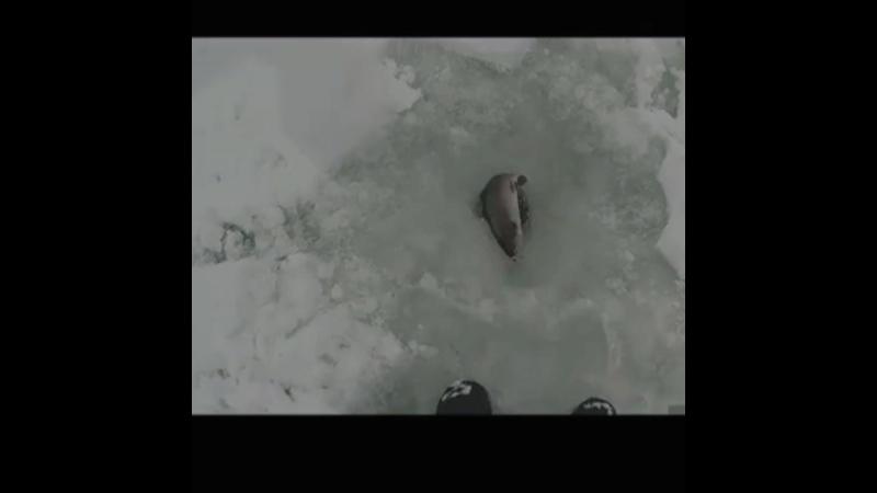 Зимняя форелевая рыбалка со льда с оригинальной приманкой AKKOI Original Glider