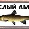 """Белый Амур""-рыболовный магазин г. Орел"