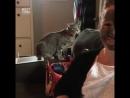 Кот не оценил