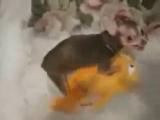 собака трахает игрушку