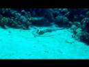 Подводная красота mp4
