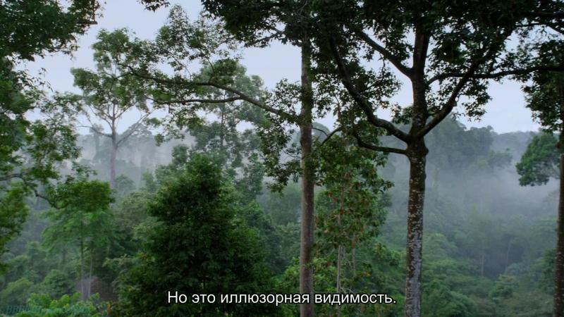 BBC «В краю муссонов (4). Экстравагантные изгои» (Познавательный, природа, путешествие, 2014)