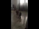 Коты борцы