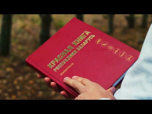 Світшоты з вышыўкай Птушкі Чырвонай кнігі