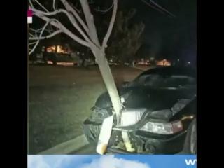 Подвезла деревце