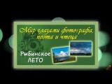 Красивые стихи и фото Рыбинское лето