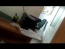 Отказ ветеринаров гос. приюта Щербинка дать направление на операцию за счет Автодора ЮЗАО