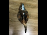Кот-убийца селедки!