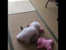 Собачка и игрушки