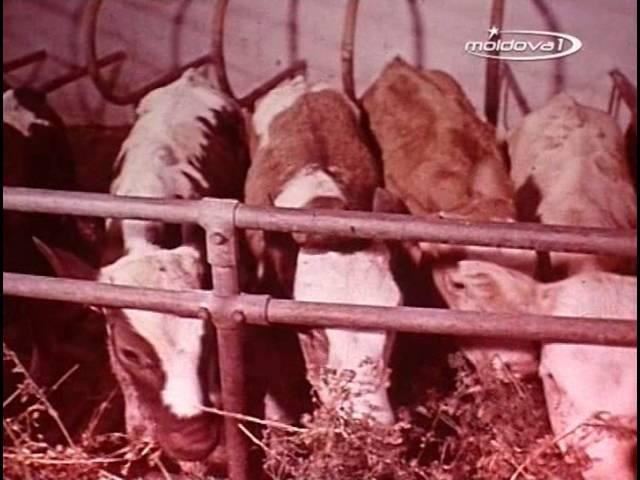Документальный фильм Начало пути, СССР, 1979 г.МССР - ЖИВОТНОВОДСТВО (1979 ГОД)
